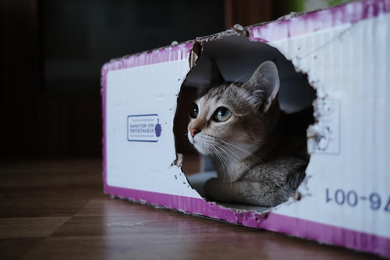 kat i boks